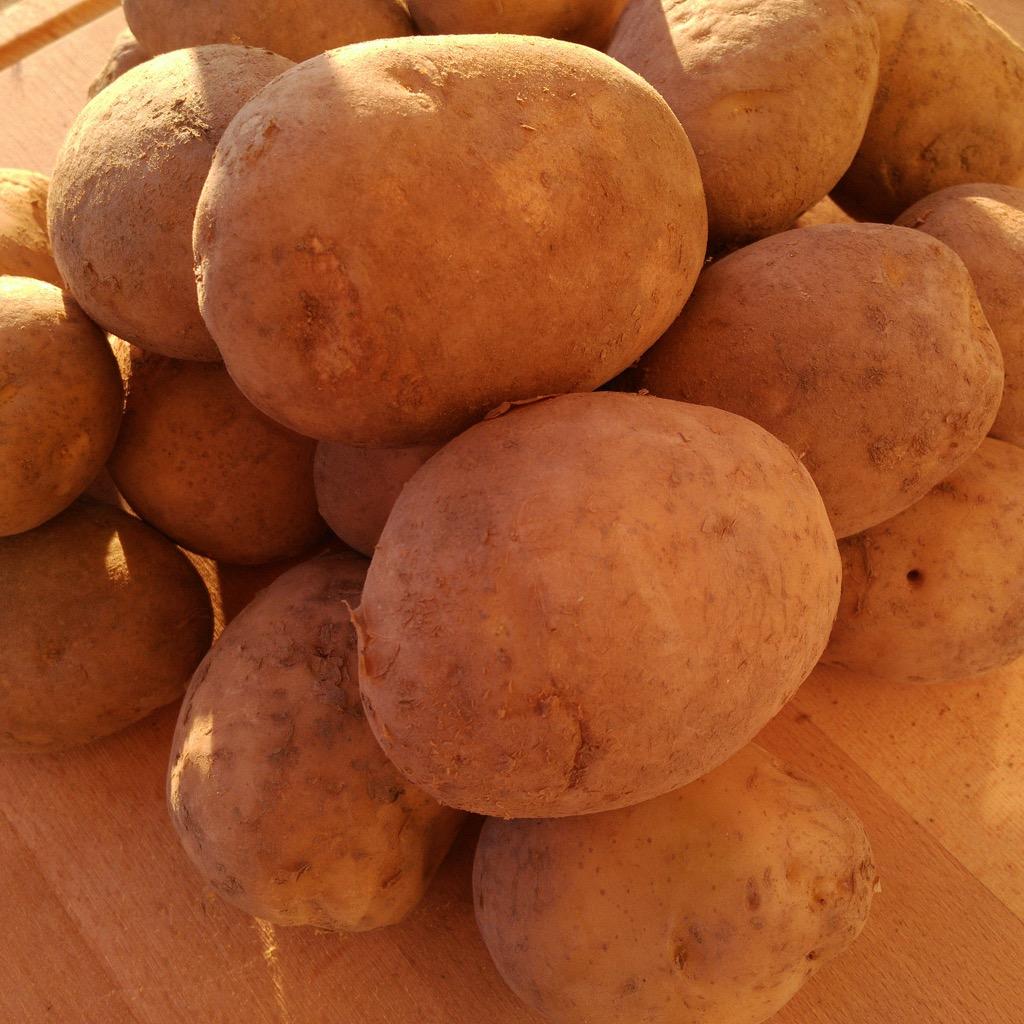 Foto patatas variedad amarin